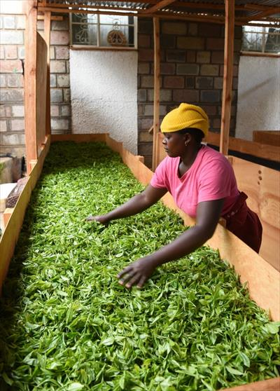 Flowering Exports-- ChinAfrica